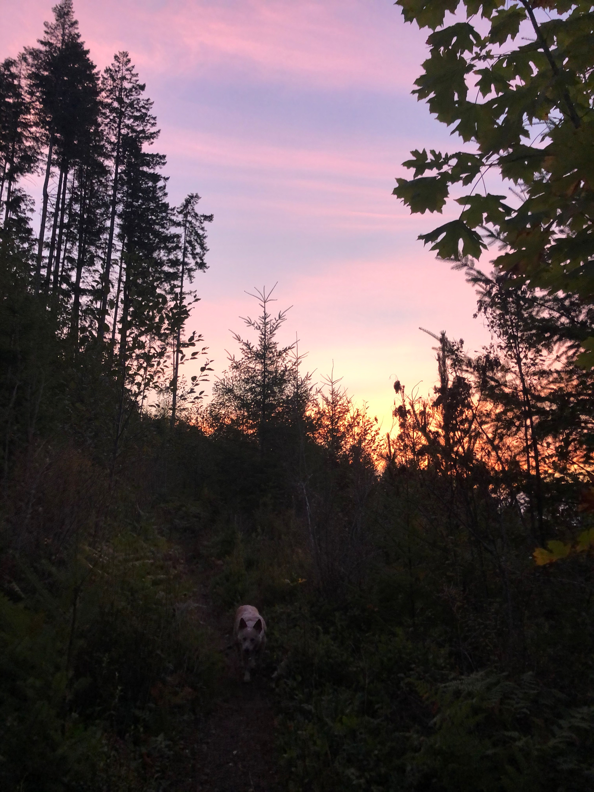 Green Mountain, WA, Kenai, hiking, sunsets