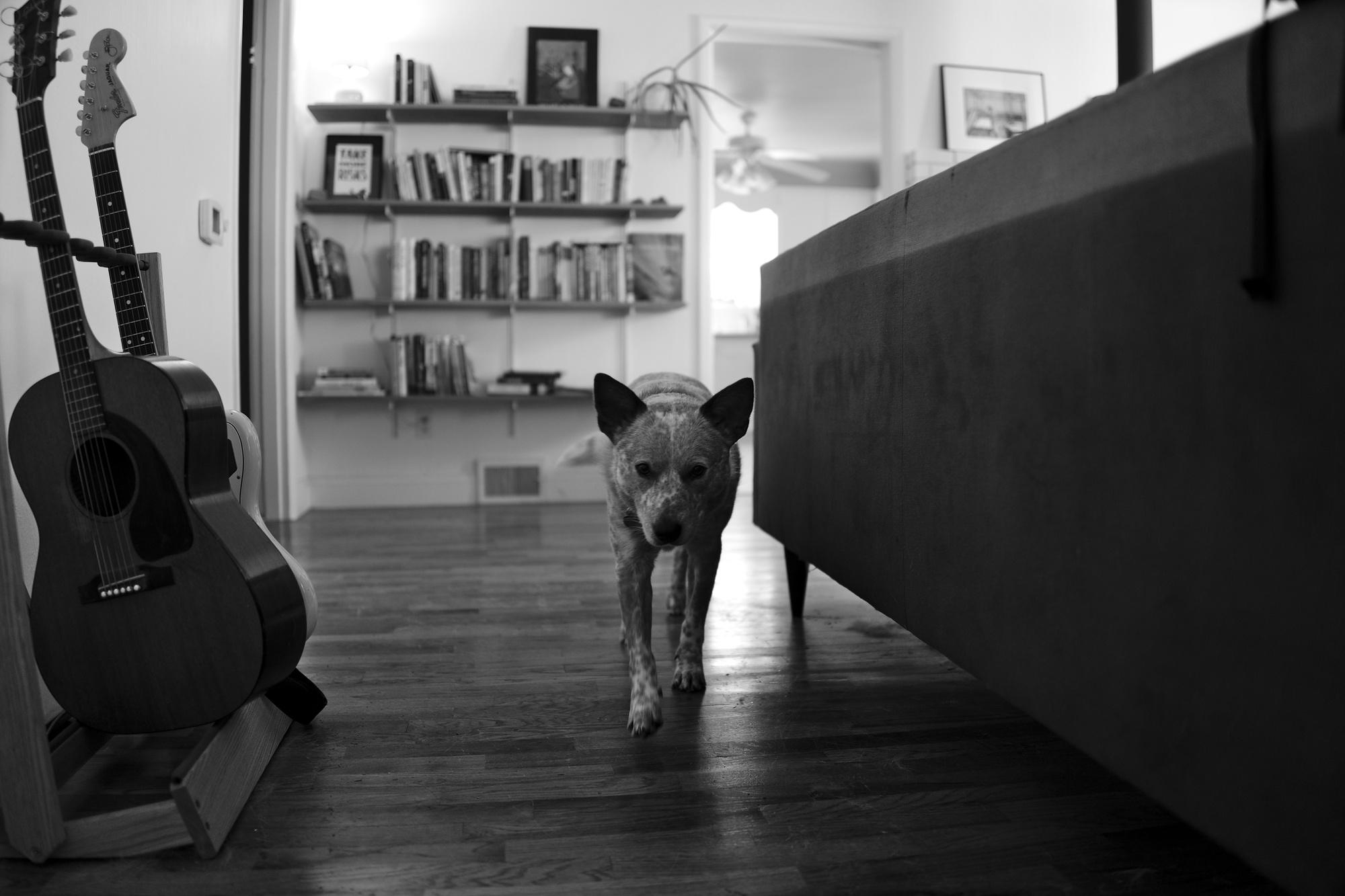 Bremerton, WA, Kenai, dogs, b&w