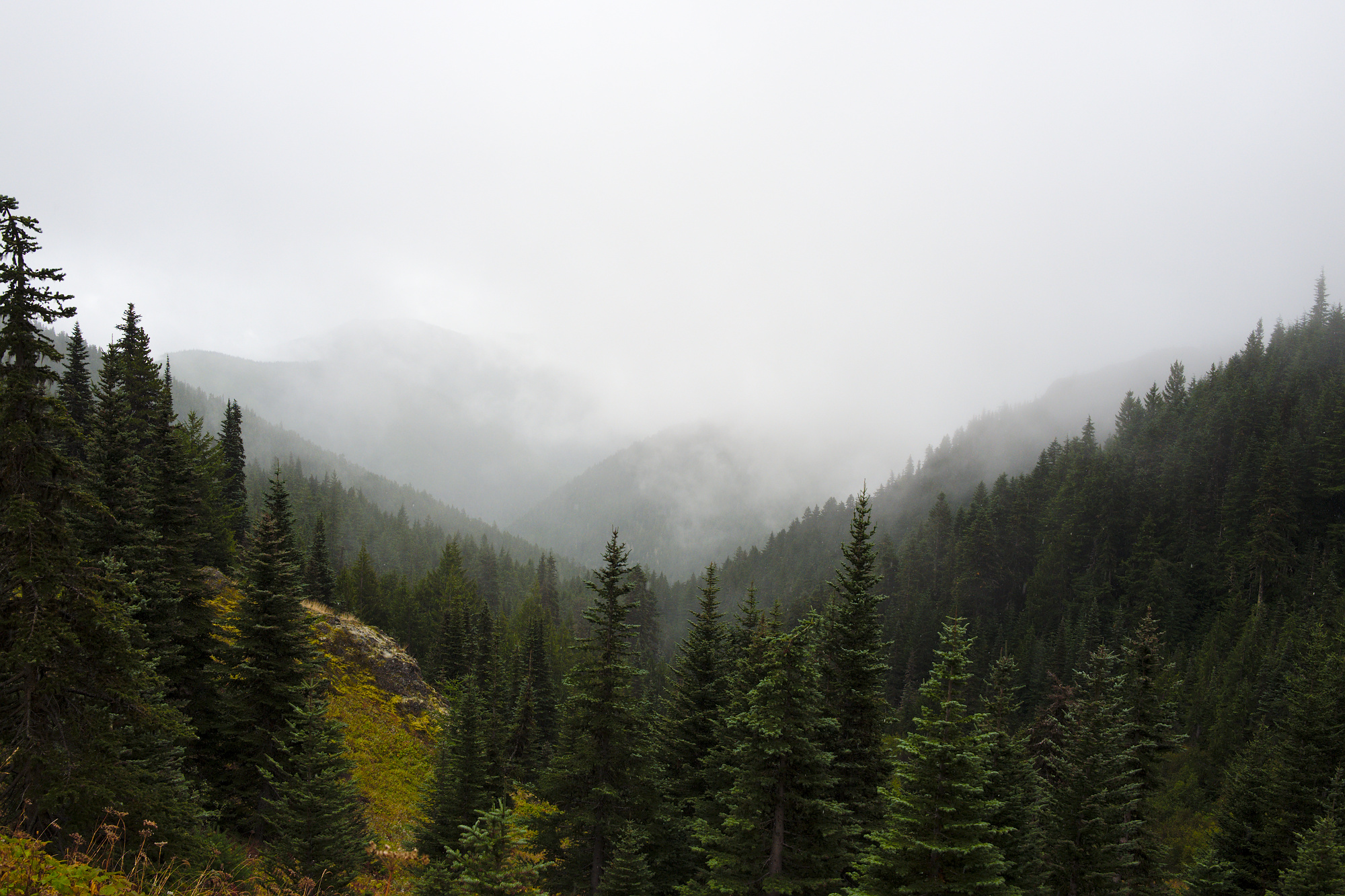 Olympic Peninsula, WA, landscapes, trees