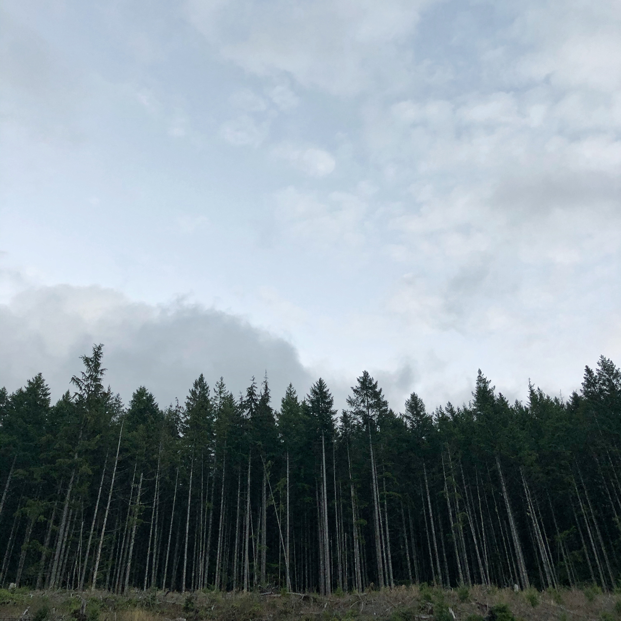 Green Mountain, WA, trees, landscapes