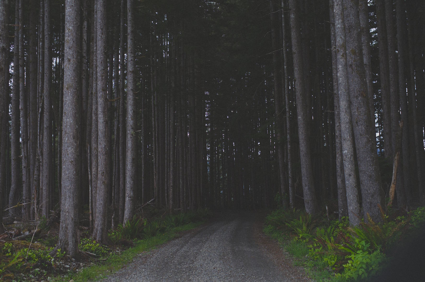 Olympic Peninsula, WA, landscapes, trees