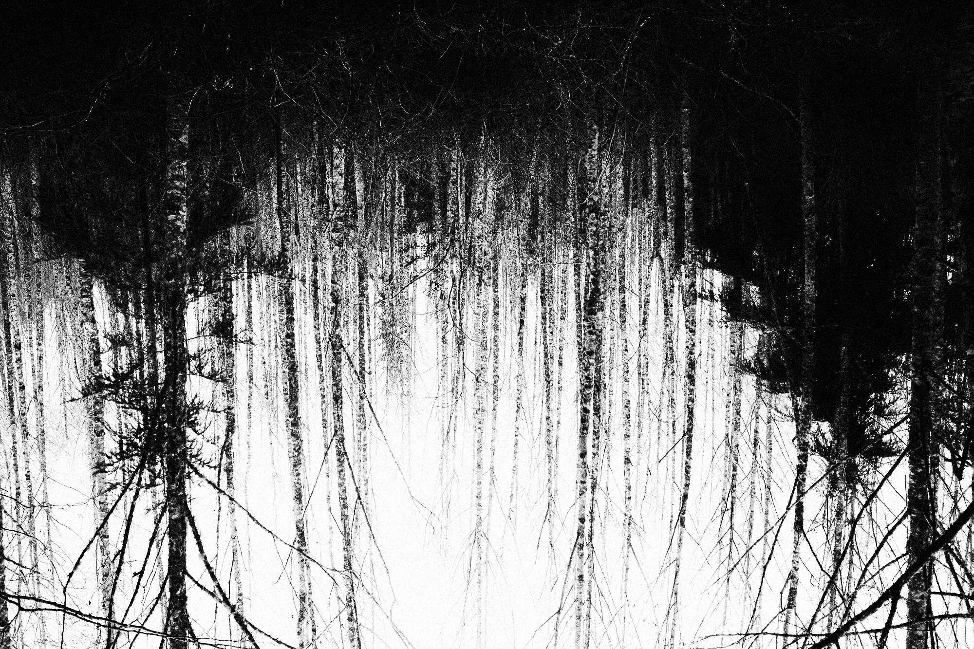 Port Gamble, WA, trees, b&w