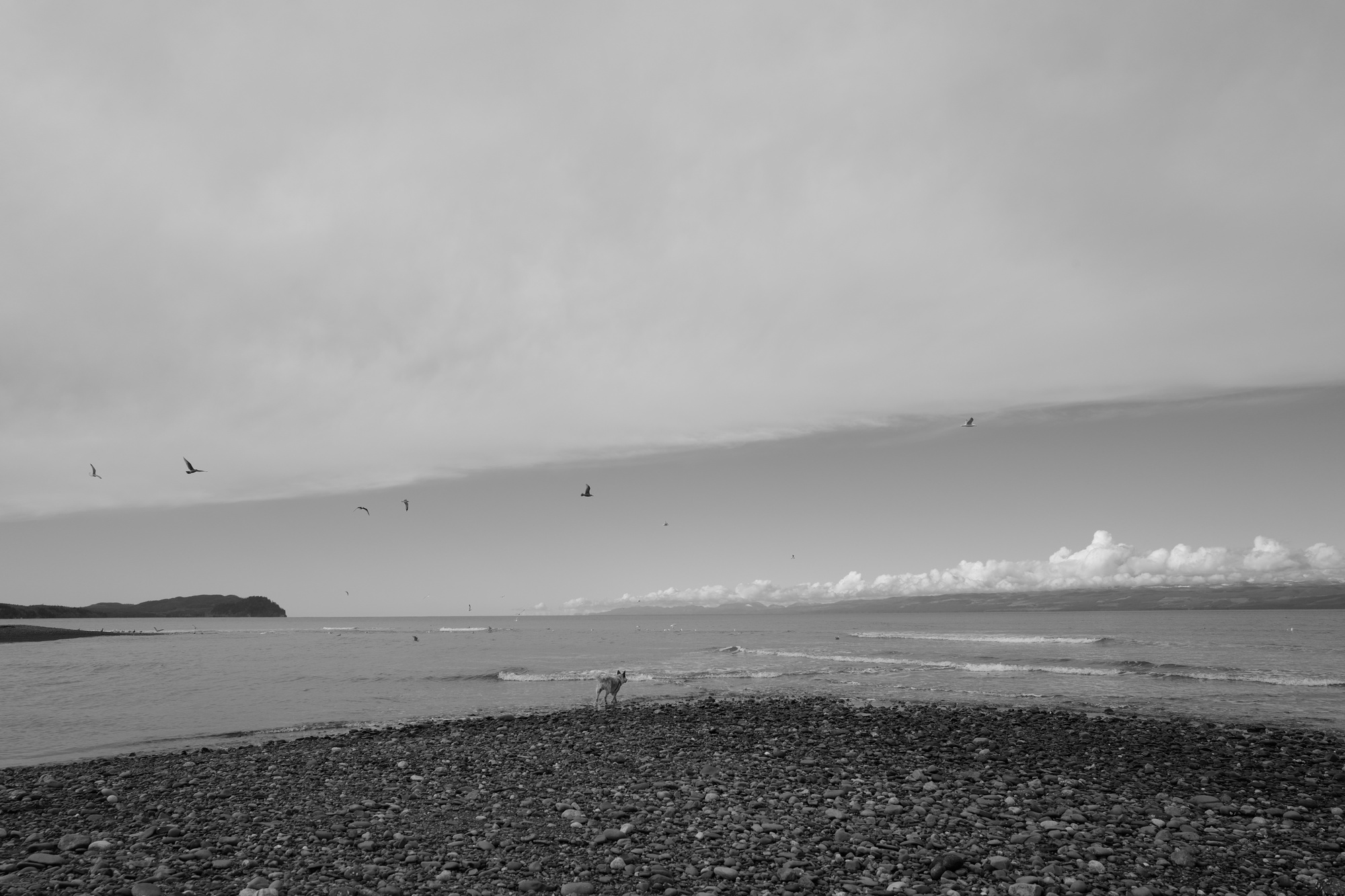 Olympic Peninsula, WA, Kenai, dogs, landscapes, ocean