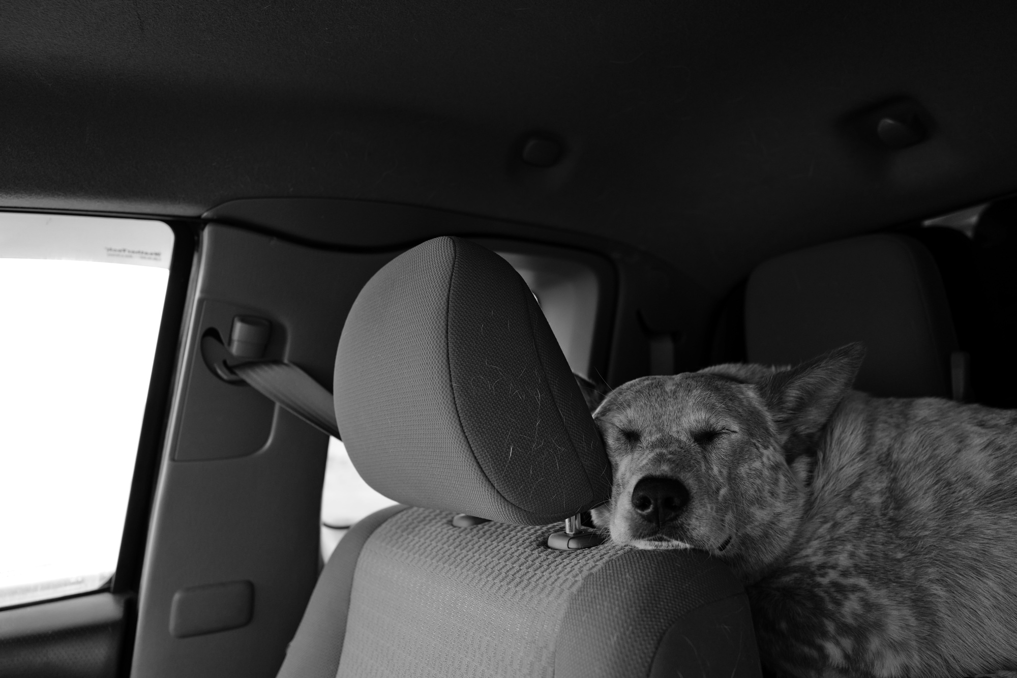 Montana, Kenai, dogs, on the road, b&w