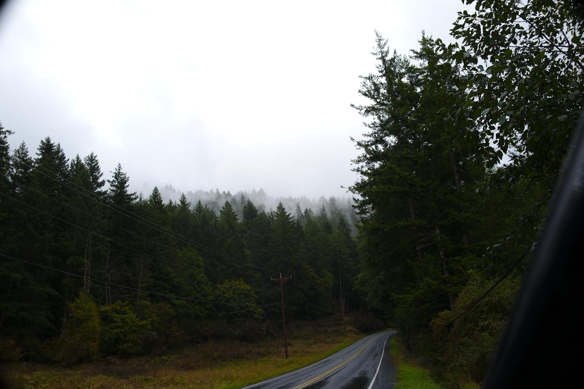 Orcas Island, WA, on the road, trees