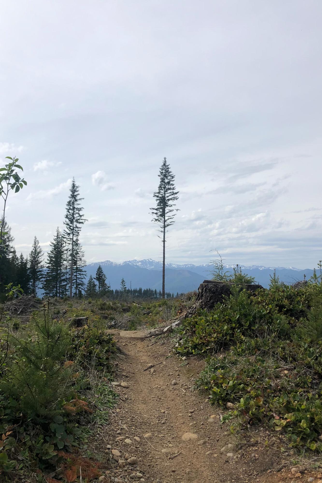 Green Mountain, WA, landscapes