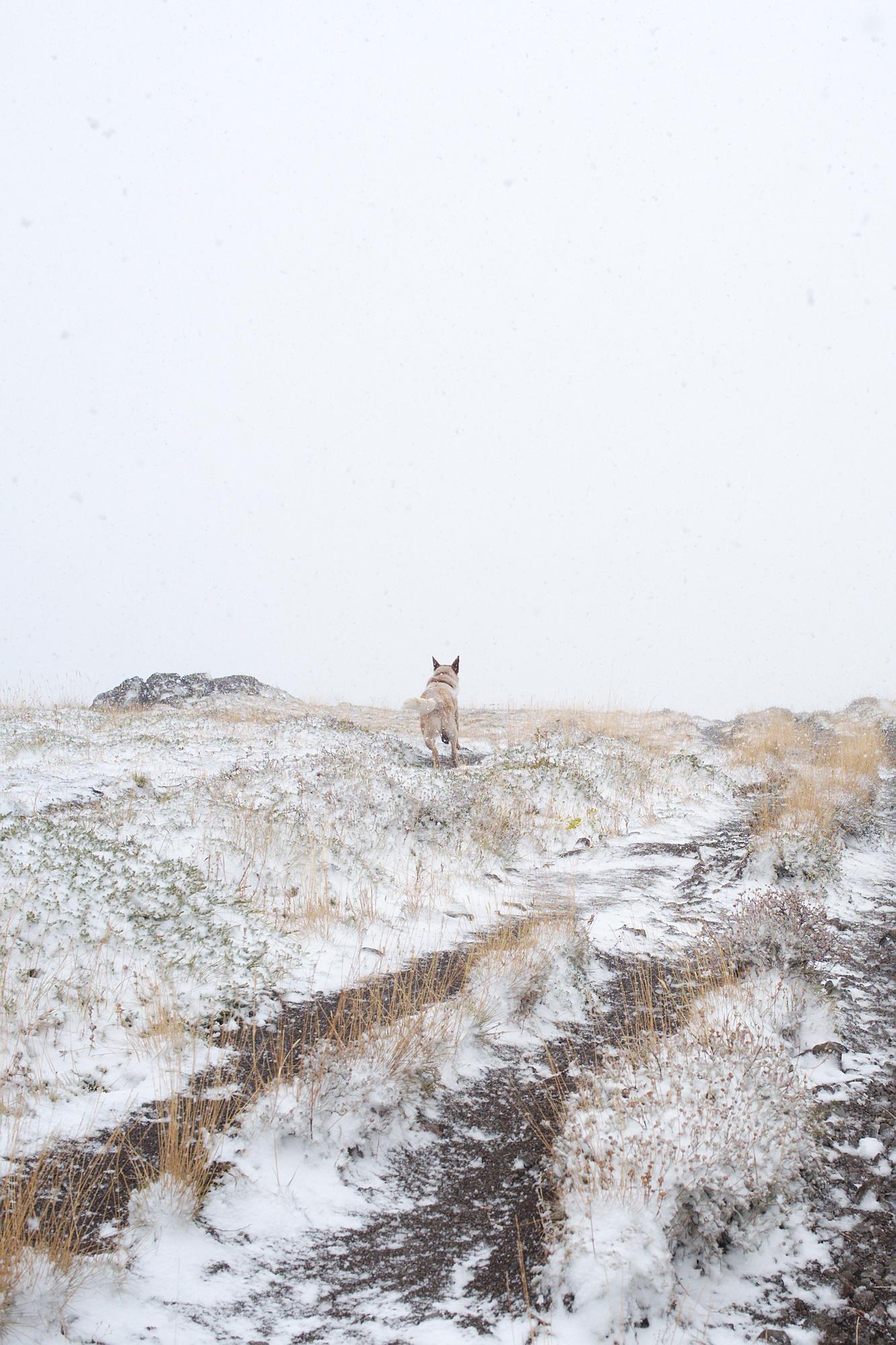 Olympic Peninsula, WA, Kenai, dogs