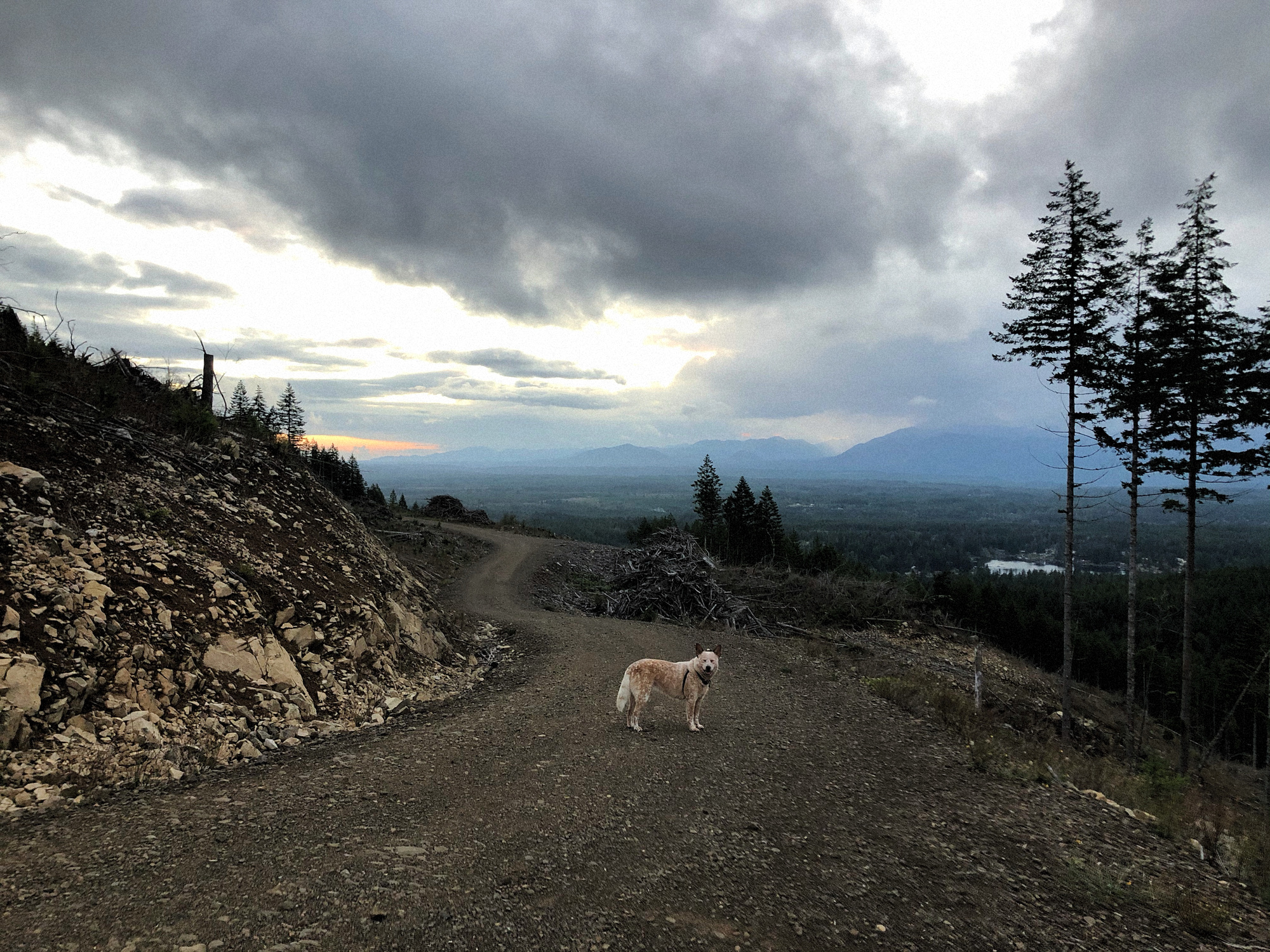 Green Mountain, WA, Kenai, dogs