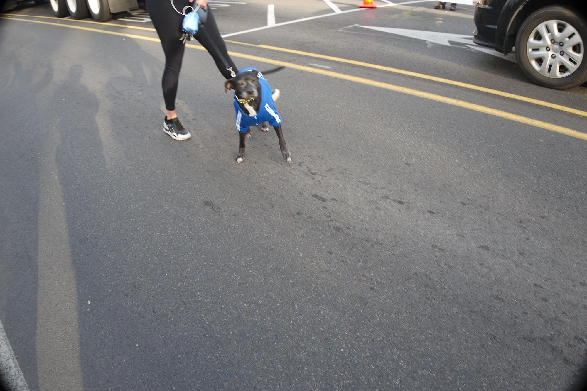 Bremerton, WA, dogs