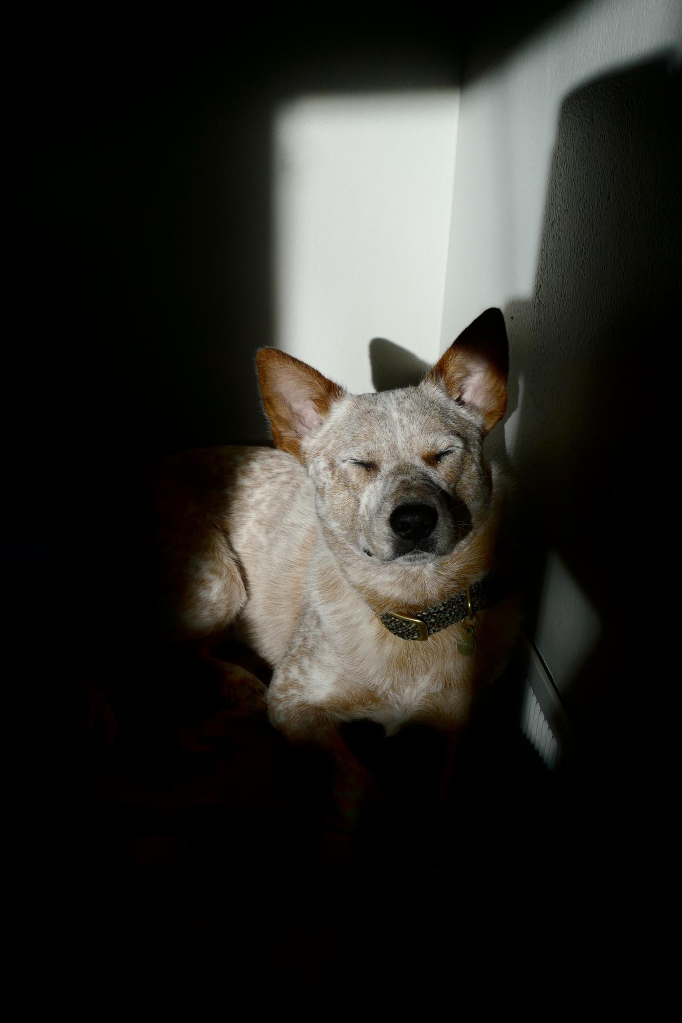 Bremerton, WA, Kenai, dogs